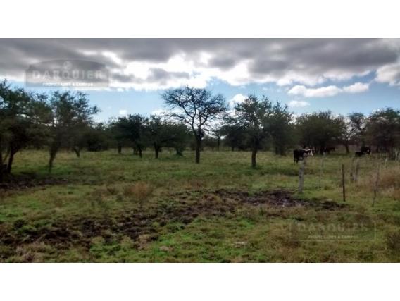 Campo En Venta - 91 Ha - Rocamora - Entre Rios