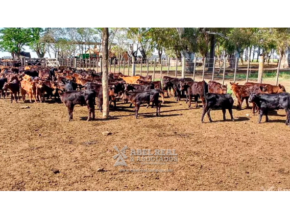 Campo En Venta. El Triunfo. Bs Aires. 500 Has.ganadero