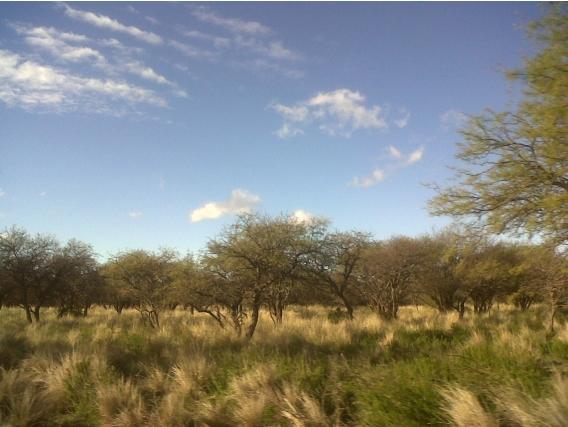 Campo Venta Luan Toro La Pampa. 12500 Has.us 650/ha
