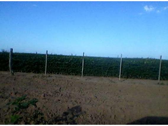 Campo En Venta En Las Breñas 600 Ha. Apto Agricultura
