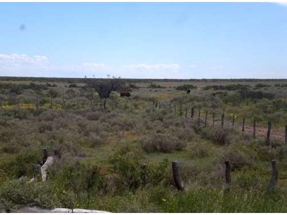 Campo En Venta En Lihuel- Calel. 6500 Has.