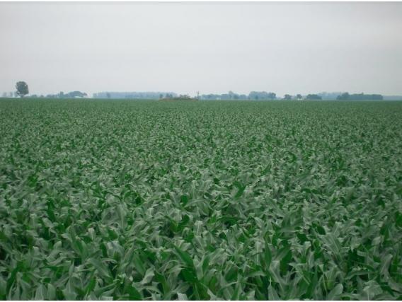 Campo En Venta En Lincoln 953 Has. Aptitud Agrícola.