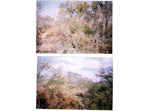 Campo En Venta. Lugones Santiago Del Estero. 2000 Has.