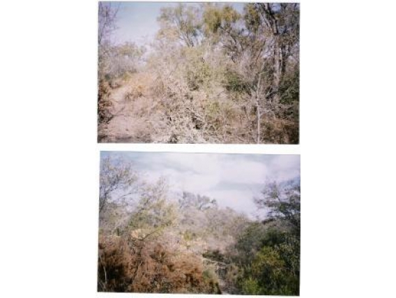 Campo En Venta Lugones. Santiago Estero 2000 Has. Monte