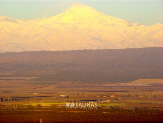 Campo En Venta En Mendoza. 300 Has. Uso