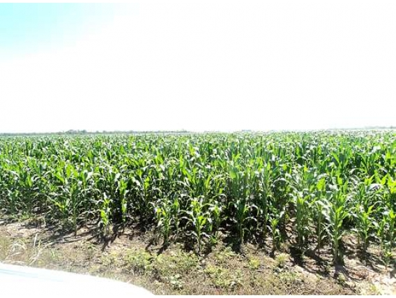 Campo En Venta En Sachayoj 34000 Ha. Apto Agricultura