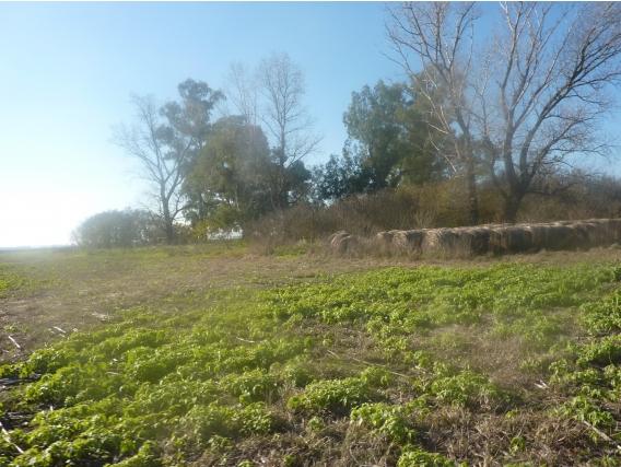 Campo En Venta En Saladillo. 170 Has. Agricola