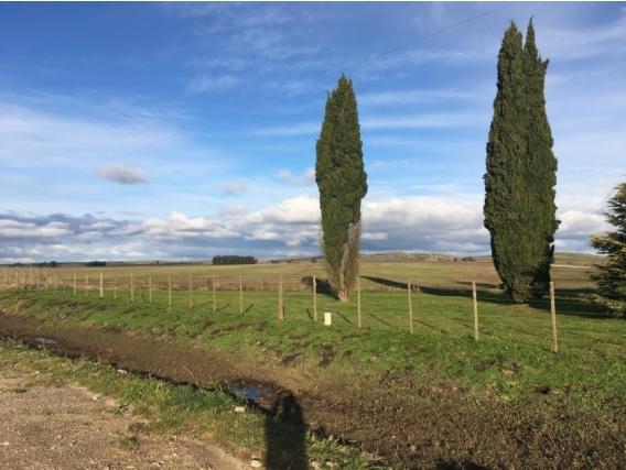 Campo En Venta En Tandil/Gardey. 50 Has. Agrícola