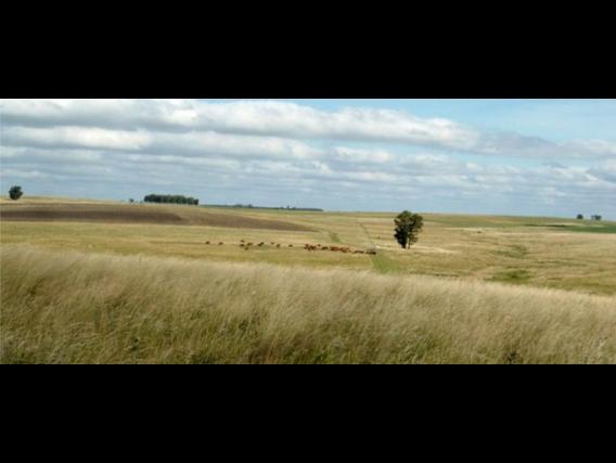 Campo De 1680 Has Venta Depto. Flores - Uruguay.--M--