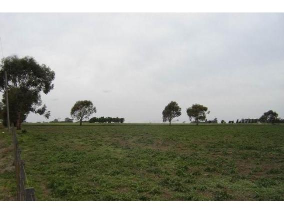 Campo En Venta En Zenón Pereyra 74 Has. Apto Agrícola