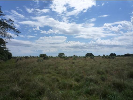 Campo En Venta. San Miguel. 850Ha. Forestación