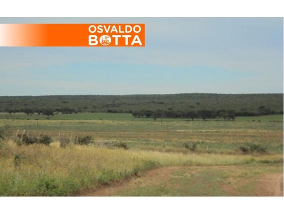 Campo En Venta. Telén, La Pampa. 2500 Ha. Ganadero