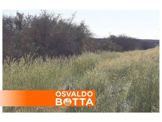 Campo En Venta. Winifreda, La Pampa. 500 Ha. Agro