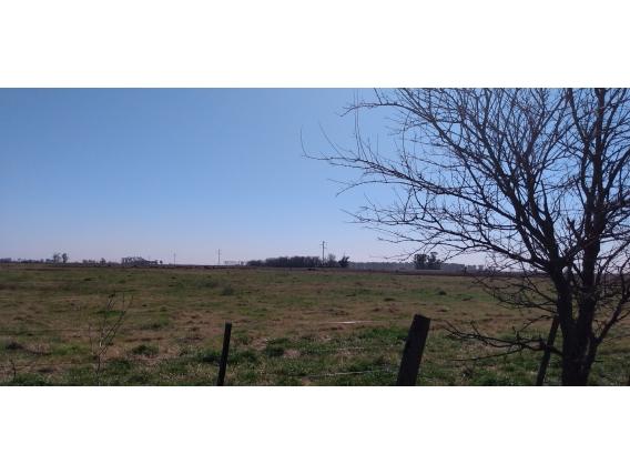 Campo Ganadero 38 Has .- Saladillo, Provincia De Bs.as.