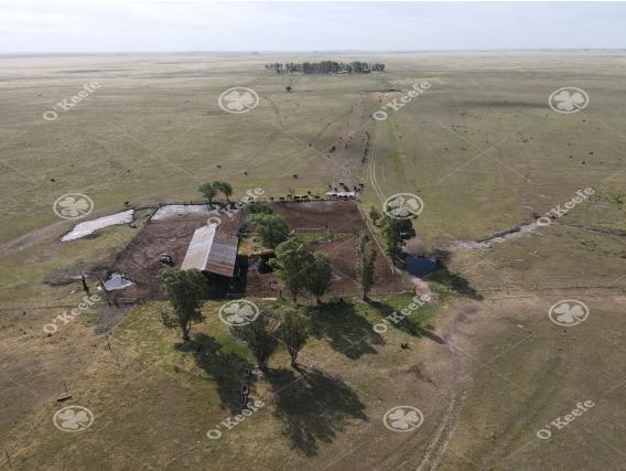 Campo Ganadero De 4300 Has - Sobre Ruta - Bahía Blanca