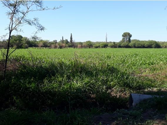 Campo Ganadero Mixto 1500 Ha. C/riego Cruz Del Eje Cba.