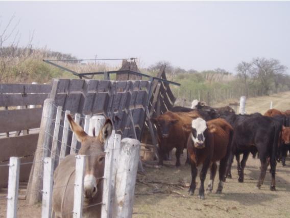 Campo De 201 Has En Monigotes, Santa Fe.