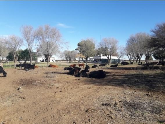 Campo San Luis - 2.800 Has
