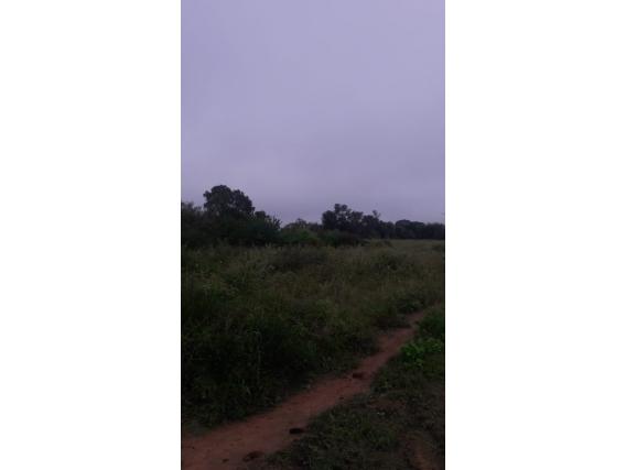 Campo Sobre Ruta En Formosa