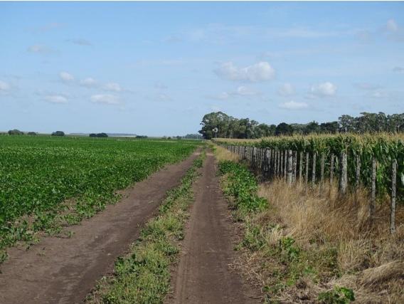 Ba3205 Campo Venta 330 Has. Balcarce Agricola Riego