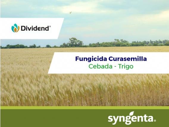 Fungicida Curasemilla Dividend ®