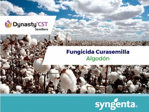 Fungicida - Curasemilla Dynasty CST ® Semillero
