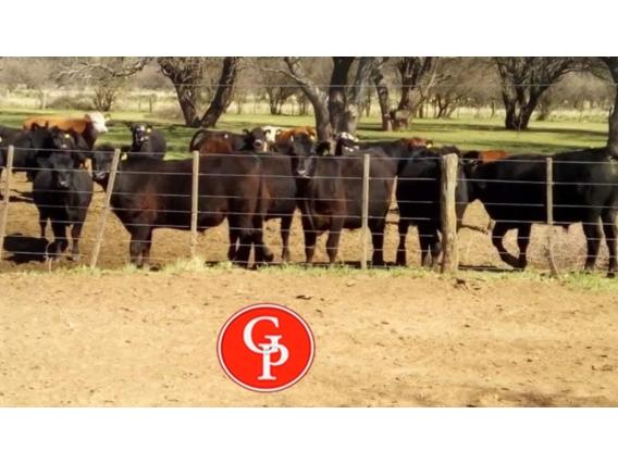 En Venta 2500 Has En Carro Quemado La Pampa.-