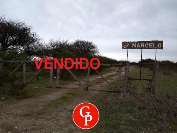 En Venta 309 Has. Abramo La Pampa.-