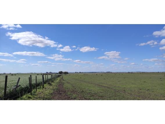 500 Has.agrícolas- Gualeguaychú - Entre Ríos