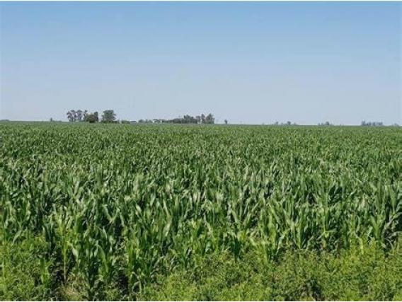 Excelente Campo Agrícola En Marcos Juarez