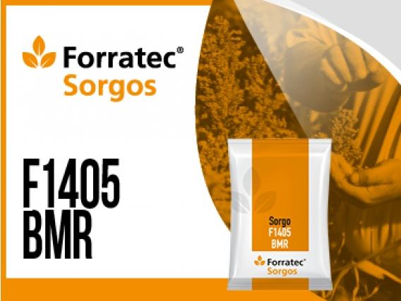 Sorgo F 1405 BMR
