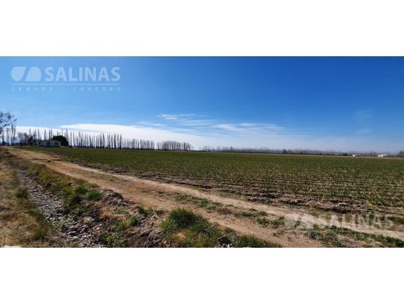 Finca En Venta 50 Ha - Tupungato , Mendoza