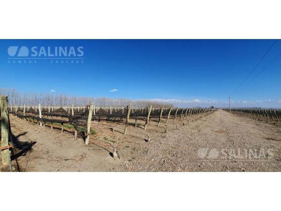 Finca En Venta 61 Ha - Tupungato, Mendoza