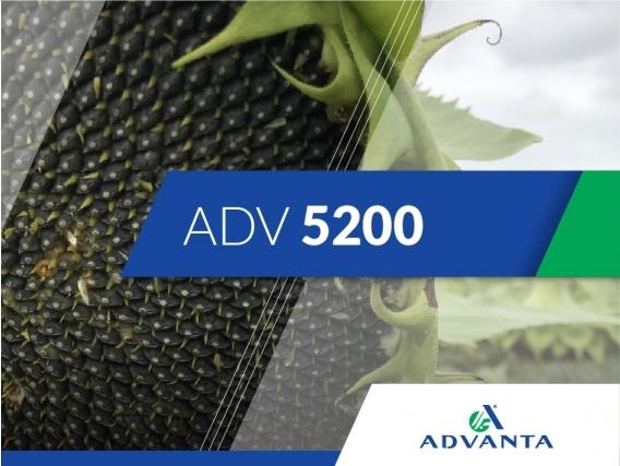 Girasol ADV 5200