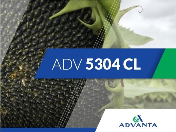 Girasol ADV 5304 CL