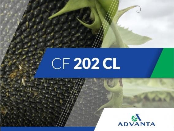 Girasol CF 202 CL