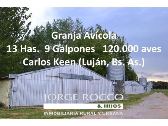 Granja Avícola En Carlos Keen Luján, Para 120.000 Aves