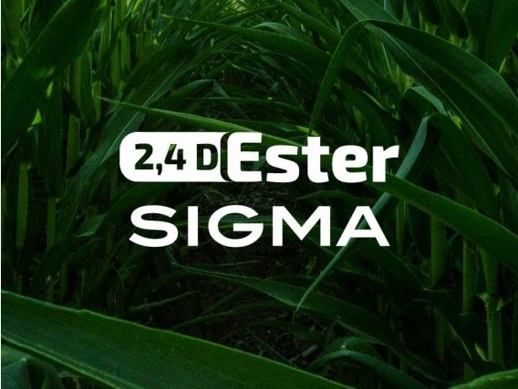 Herbicida 2,4 D Ester Sigma - Sigma Agro