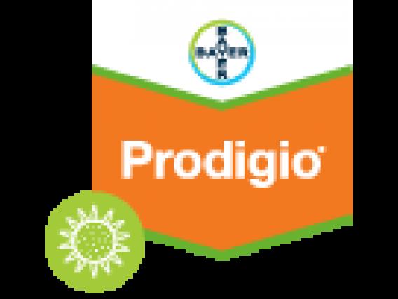Herbicida Prodigio® 60 SC Aclonifen - Bayer