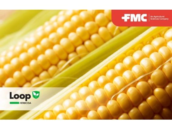 Herbicida Loop Nicosulfuron - FMC