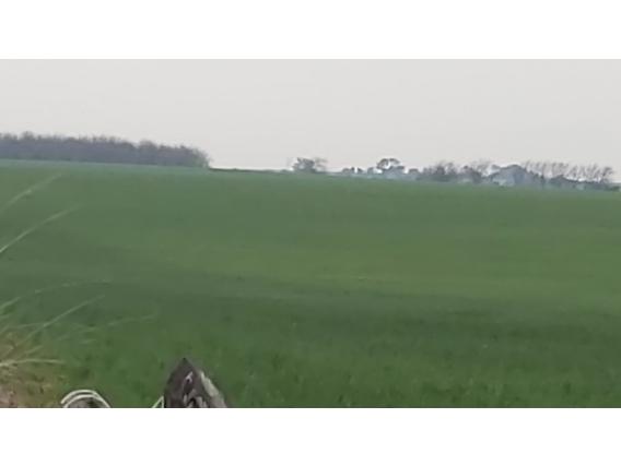 Importante Campo Agricola Sobre Pavimento