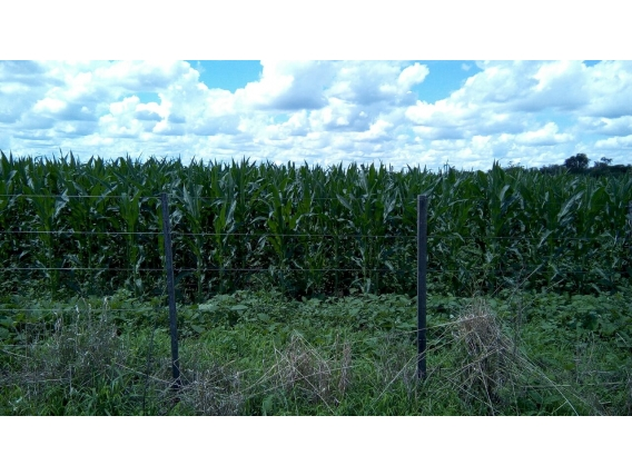 Inriville, 15 Has Agrícolas Sobre Ruta