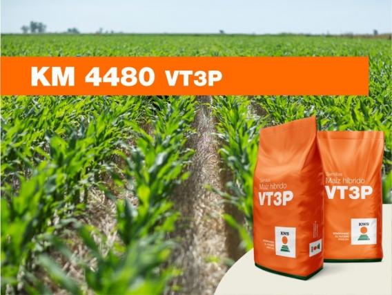 Maíz KWS KM 4480 VT3P