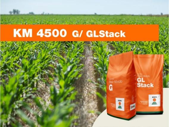 Maíz KWS KM 4500 G/ GLStack