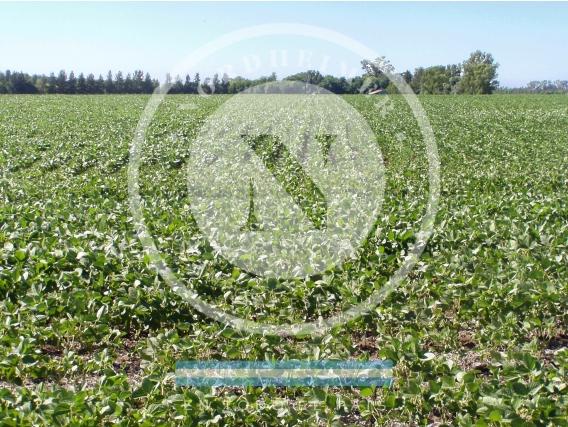 Los Cardales 70 Ha, Campo Agrícola, Para Emprendimiento