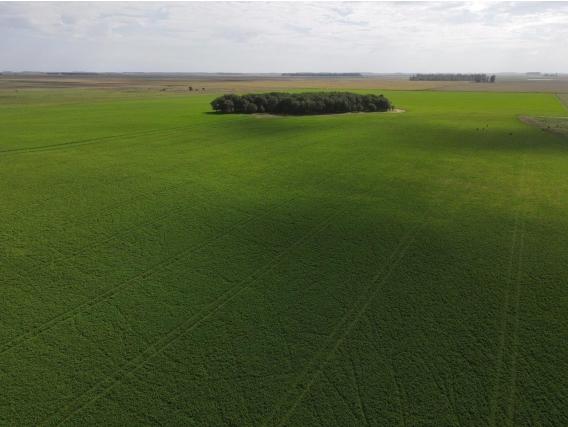 Lp0201 Venta 966 Has Agricolas Catrilo La Pampa