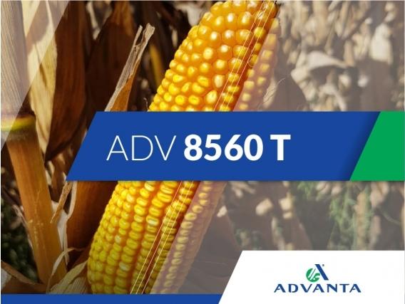 Maíz ADV 8560 T