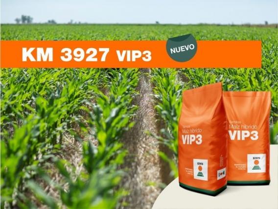 Maíz KM 3927 VIP3