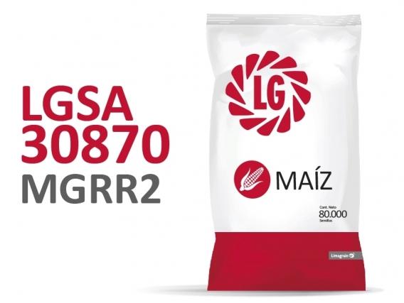 Maíz LG 30870 MGRR2