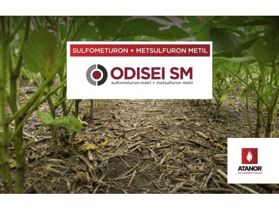 Herbicida Odisei SM - Sulfometuron + Metsulfuron Metil